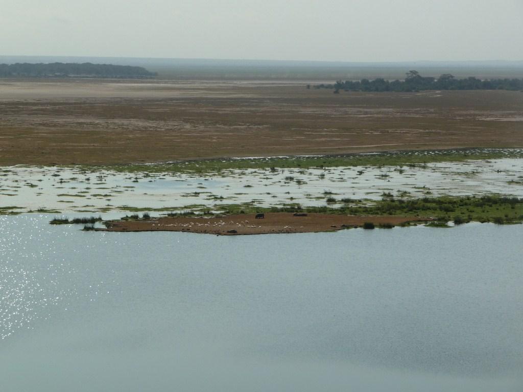 L'île aux hippopotames à Amboseli