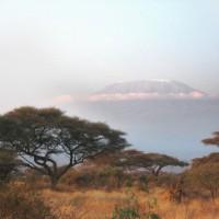 Amboseli : un parc avec vue sur le Kilimandjaro