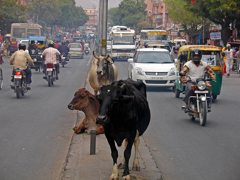 Jaipur Recit de voyage en Inde