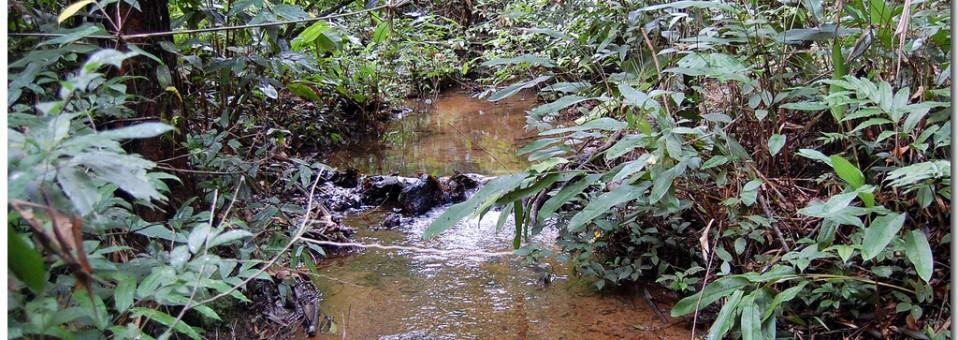 La Guyane, un bout de France en pleine forêt amazonienne